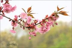 lyserødt-picture-800