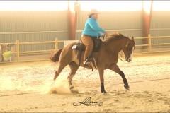 reining15