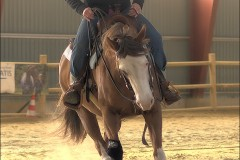 reining26