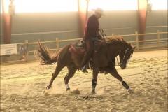 reining5