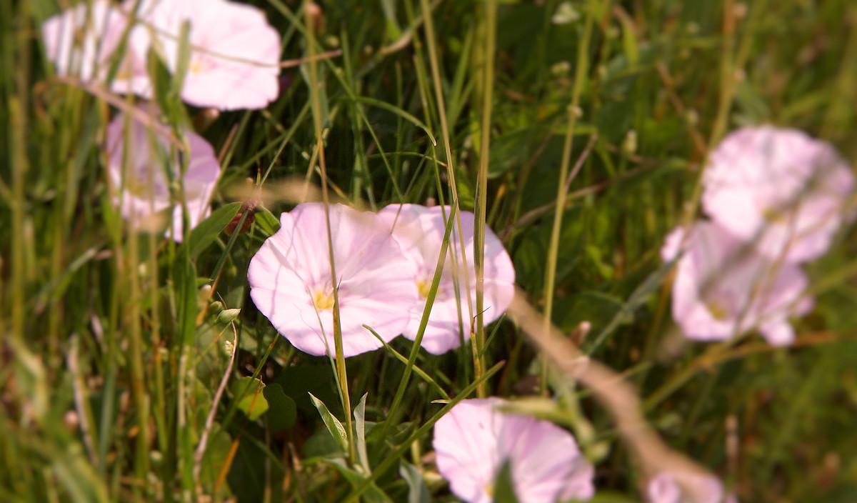 blomst-large